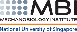 Mechanobiology Institute, Singapore